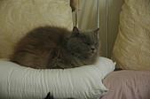 貓貓:DSC_4071.JPG