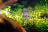 閒散人的水草造景:DSC_3580.JPG