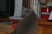 貓貓:DSC_0012-1-1.JPG