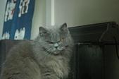 貓貓:DSC_8553.JPG