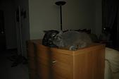 貓貓:DSC_0214-1.JPG