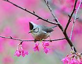 八仙山飛羽迎新春:090131八仙山_276.jpg
