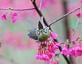 八仙山飛羽迎新春:090131八仙山_280.jpg