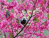 武陵花鳥:2008_02_01武陵0111.jpg