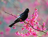 八仙山飛羽迎新春:090131八仙山_13.jpg