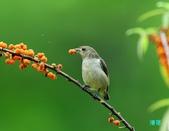 小小鳥綠啄花:110418平廣綠啄花_086-1.jpg