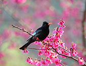 八仙山飛羽迎新春:090131八仙山_15.jpg