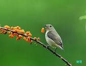 小小鳥綠啄花:110418平廣綠啄花_102-1.jpg