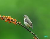 小小鳥綠啄花:110418平廣綠啄花_104-1.jpg