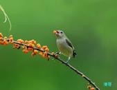 小小鳥綠啄花:110418平廣綠啄花_107-1.jpg