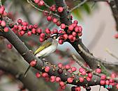 美堤河濱公園的椋鳥:DSC_1541.jpg