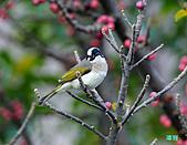美堤河濱公園的椋鳥:DSC_1572.jpg