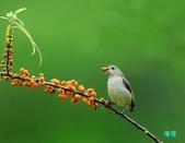 小小鳥綠啄花:110418平廣綠啄花_111-12.jpg