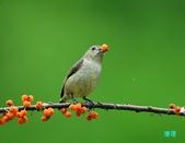 小小鳥綠啄花:110418平廣綠啄花_129-1.jpg