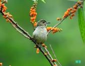 小小鳥綠啄花:110418平廣綠啄花_163.jpg