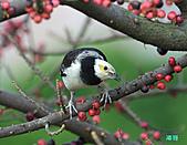 美堤河濱公園的椋鳥:DSC_1640.jpg