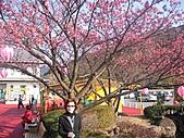 2004日本伊豆半島 東京廸斯耐:day3土肥金山_1786.