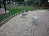 20121006-09_嘉義+鹽水+南投+埔里:IMGP0979.JPG