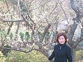 2004日本伊豆半島 東京廸斯耐:day3土肥金山_1777.