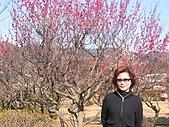 2004日本伊豆半島 東京廸斯耐:day3土肥金山_1776.