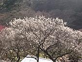 2004日本伊豆半島 東京廸斯耐:day2 熱海梅園_1671.