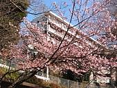2004日本伊豆半島 東京廸斯耐:day2 熱海梅園_1670.