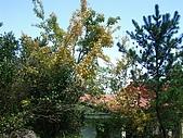 20060812桃園復興_東眼山:IMGP1176.JPG