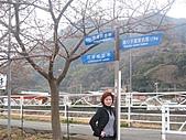 2004日本伊豆半島 東京廸斯耐:day3河津櫻花祭_1726