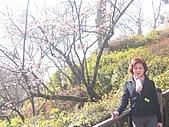 2004日本伊豆半島 東京廸斯耐:day2 小田原城_1648.