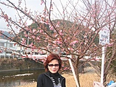 2004日本伊豆半島 東京廸斯耐:day3河津櫻花祭_1720