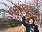 2004日本伊豆半島 東京廸斯耐:day3河津櫻花祭_1719
