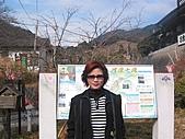2004日本伊豆半島 東京廸斯耐:day3河津瀑布_1745.