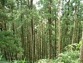 20060812桃園復興_東眼山:IMGP1213.JPG