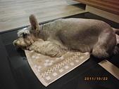 20111022:IMGP0611.JPG