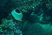 水下的世界.20:水下的世界(980329)005.jpg