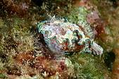 水下的世界.20:水下的世界(980329)015.jpg