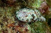 水下的世界.20:水下的世界(980329)016.jpg