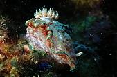 水下的世界.20:水下的世界(980329)017.jpg