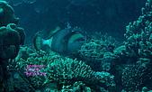 水下的世界.20:水下的世界(980329)001.jpg