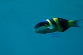 水下的世界.20:水下的世界(980329)002.jpg