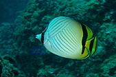 水下的世界.20:水下的世界(980329)012.jpg