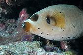 水下的世界.20:水下的世界(980329)003.jpg