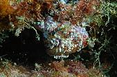 水下的世界.20:水下的世界(980329)014.jpg