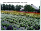 2016.08 日本北海道‧富良野‧富田農場:日本北海道‧富良野‧富田農場