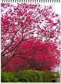 2015.02 台中新社‧千樺花園:台中新社‧千樺花園