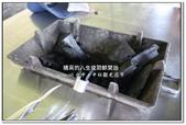 2010.06  后里-中社觀光花市:1989322293.jpg