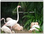 2015.09 台北‧木柵動物園:台北‧木柵動物園