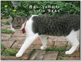 2010.10  悠遊北橫‧綠光森林:1106525353.jpg