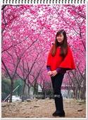 2015.02 台中新社‧櫻木花道:2015新社櫻花季‧櫻木花道