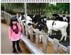 竹南‧四方鮮乳牧場